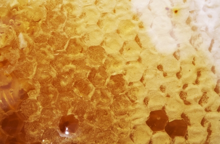 Raw Manuka Honey Cluster. Manuka Honeycomb Closeup.